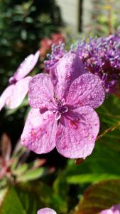 Dewy pink flower