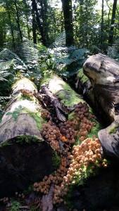 Fairy mushroom village