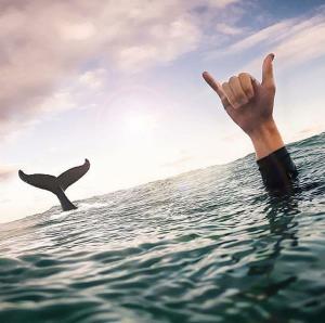 Whale stewardship