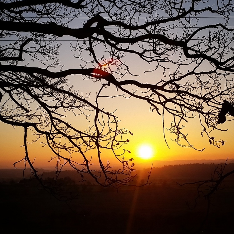 Sunset through branch