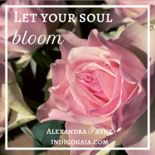let-your-soul-bloom