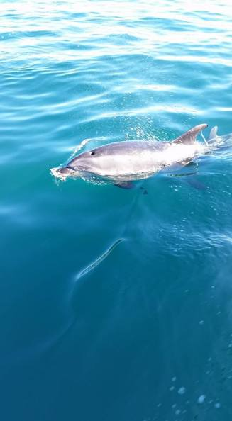 One of the many wild bottlenose dolphins we saw!