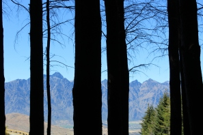 Pine forests and mountains